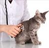 Ветеринарные клиники в Муслюмово